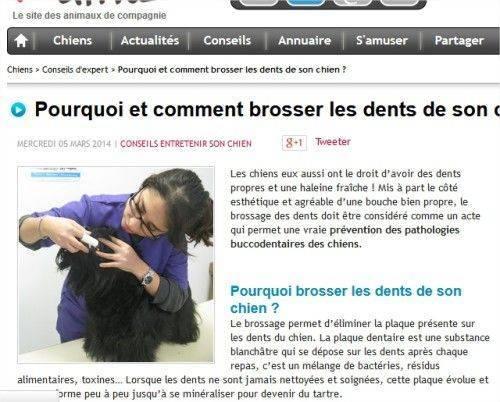 Ici un article sur comment brosser les dents de son chien.