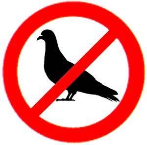 interdit_pigeons